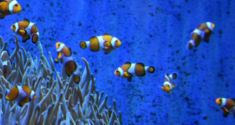 Aquari de Barcelona
