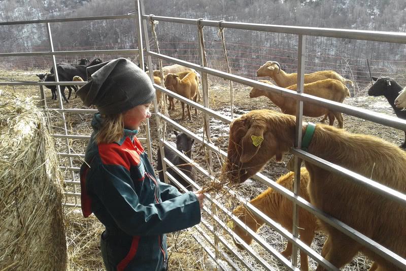 Can Pastoret cabres