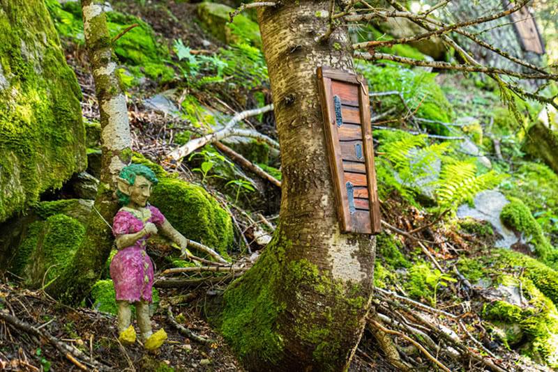 ruta el bosc del minairons