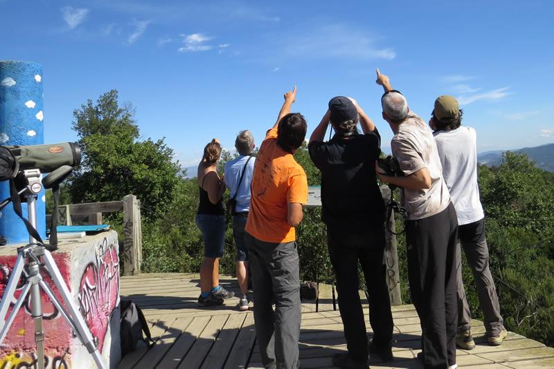 Observació de rapinyaires a la Magarola